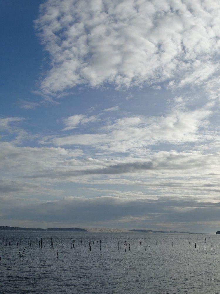Les pins parasol qui s'ouvrent vers la mer...