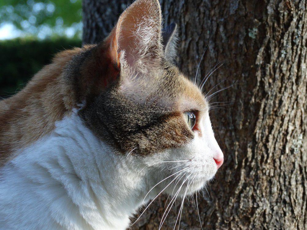 Squirel et Ecureuille chats en vacances...