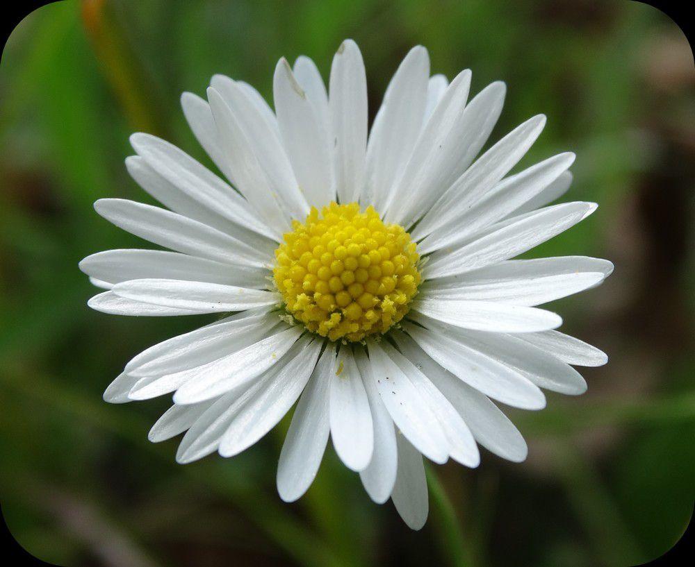 Surprises fleuries au jardin...