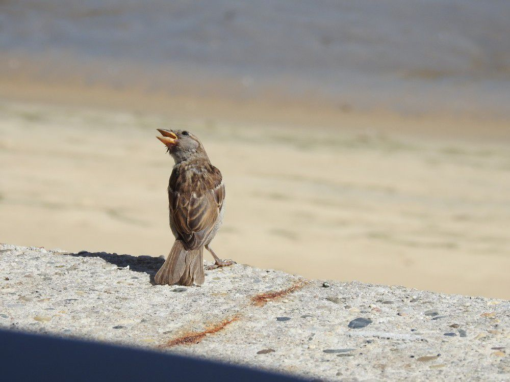 Quelques oiseaux en bord de mer...