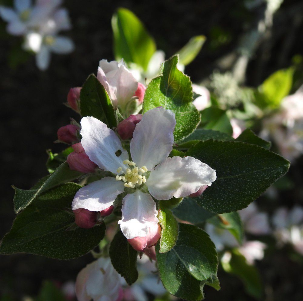 Mon Jardin En Avril quelques fleurs dans mon jardin, en avril - le blog de