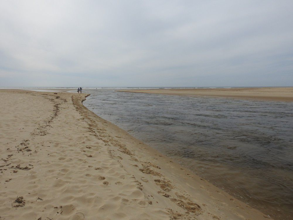 La réserve naturelle du Courant d'Huchet dans les Landes...