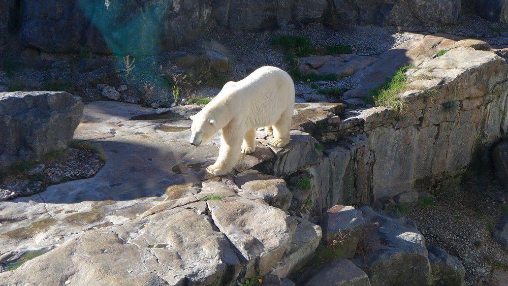 Le zoo sauvage de Saint-Félicien au Canada (1/2) : la faune...