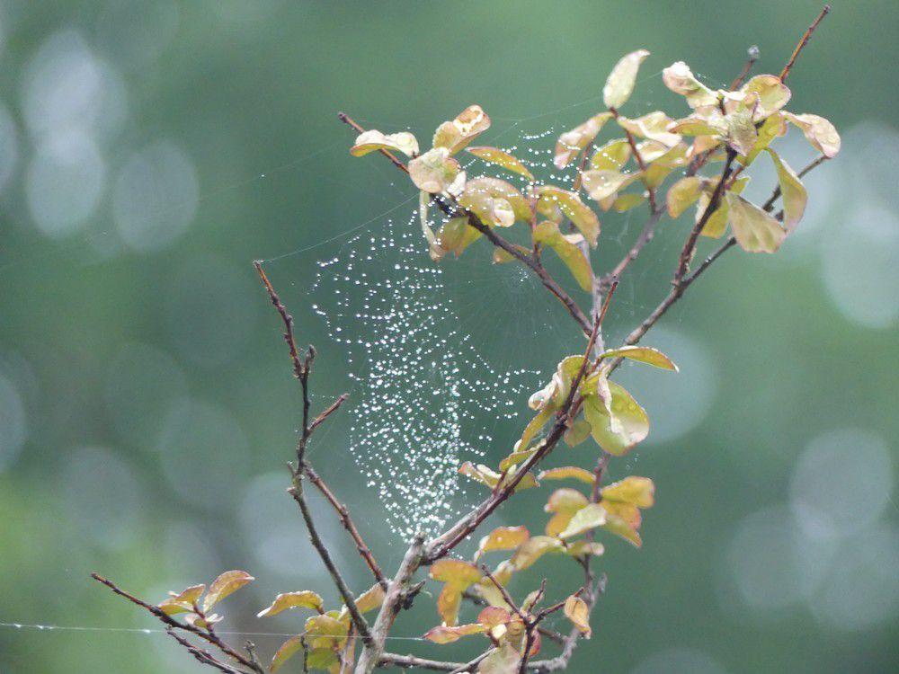Un joli collier offert par Dame Nature...