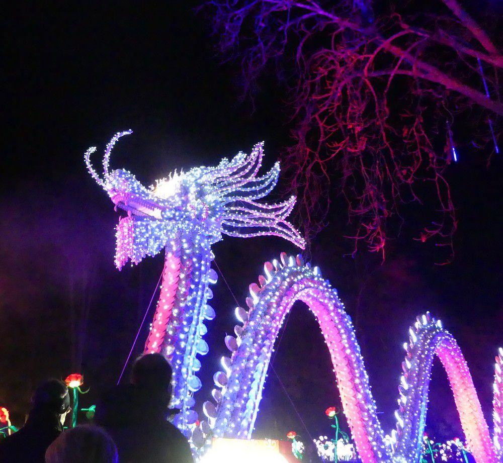Le dragon qui crache du feu, au Festival des lumières chinoises, à Gaillac...