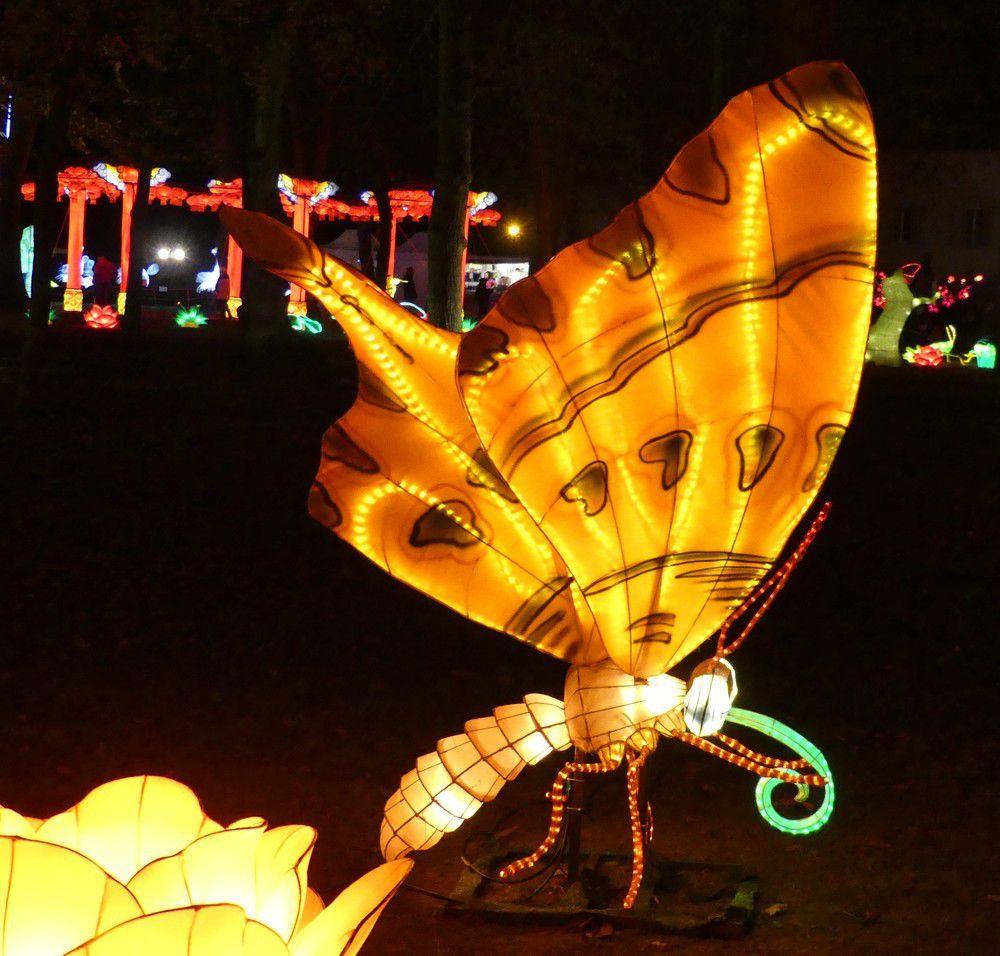 Des insectes fabuleux au Festival des Lanternes Chinoises à Gaillac...