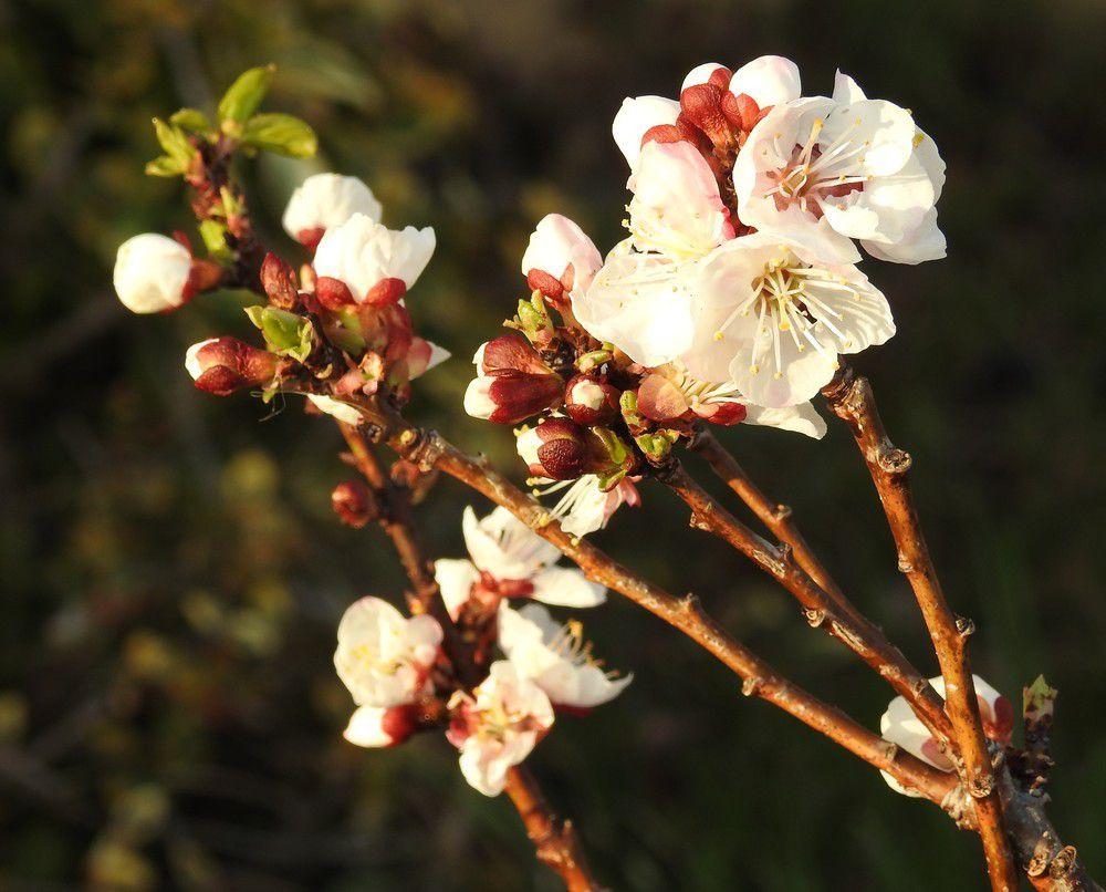 Petites fleurs de mars 2019...