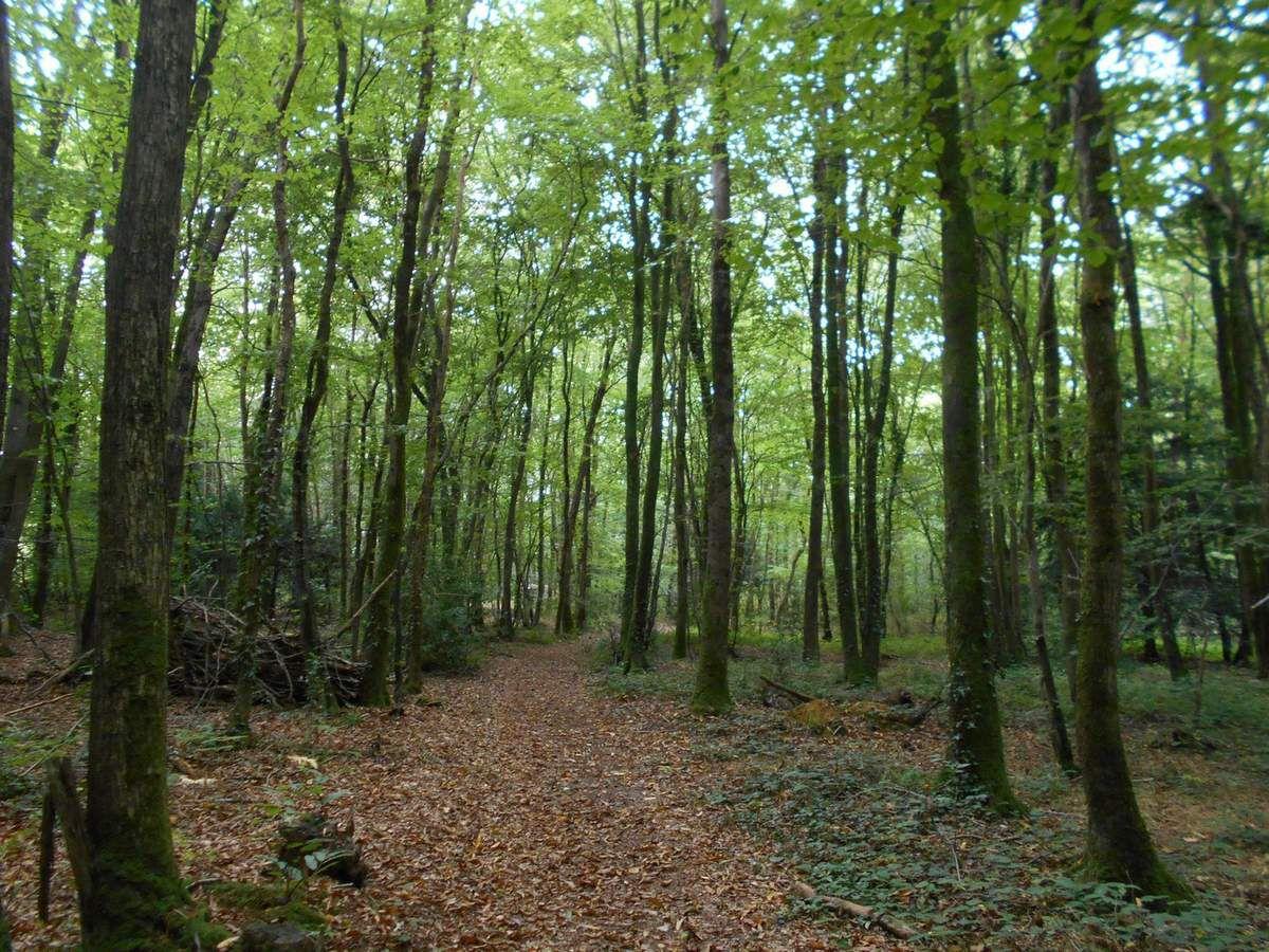 Dans une forêt, l'esprit de la forêt