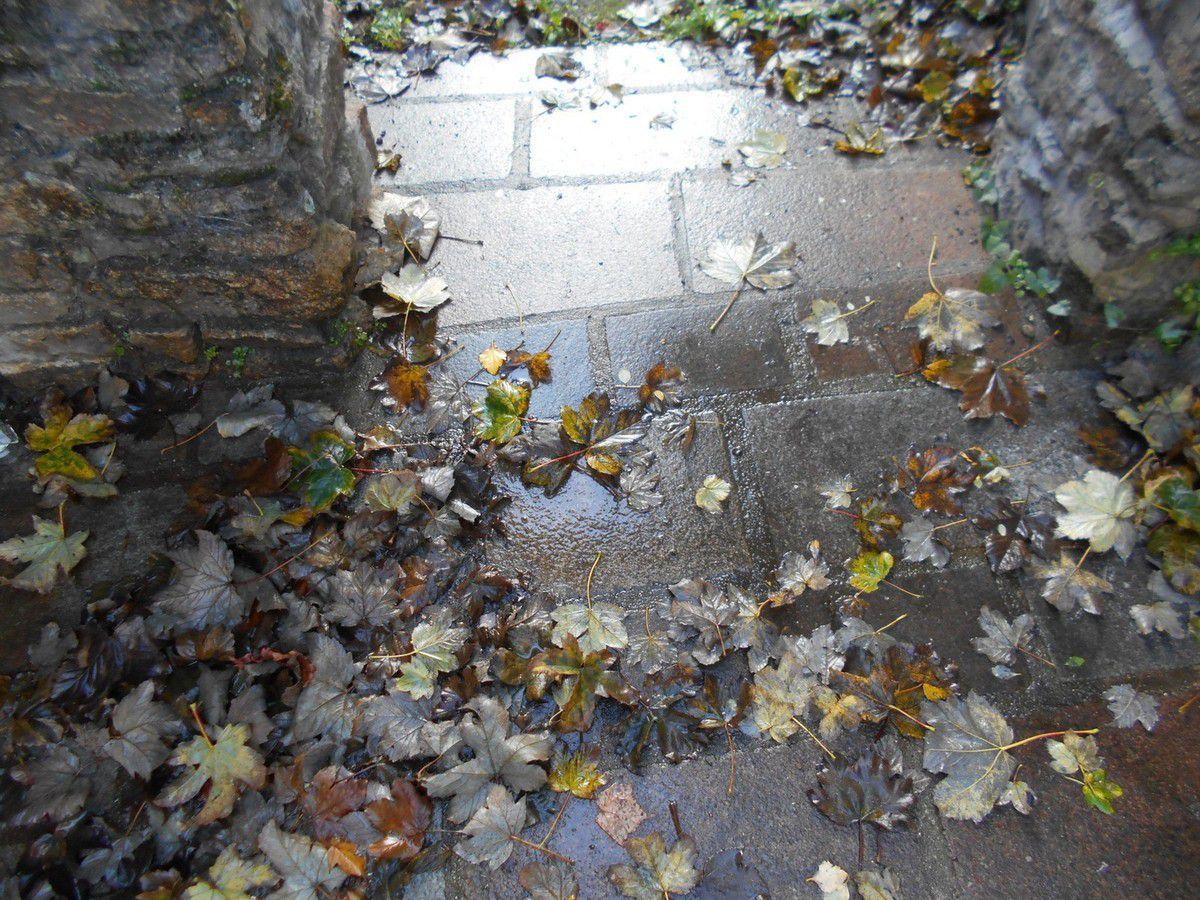 Une journée d'automne à Quintin
