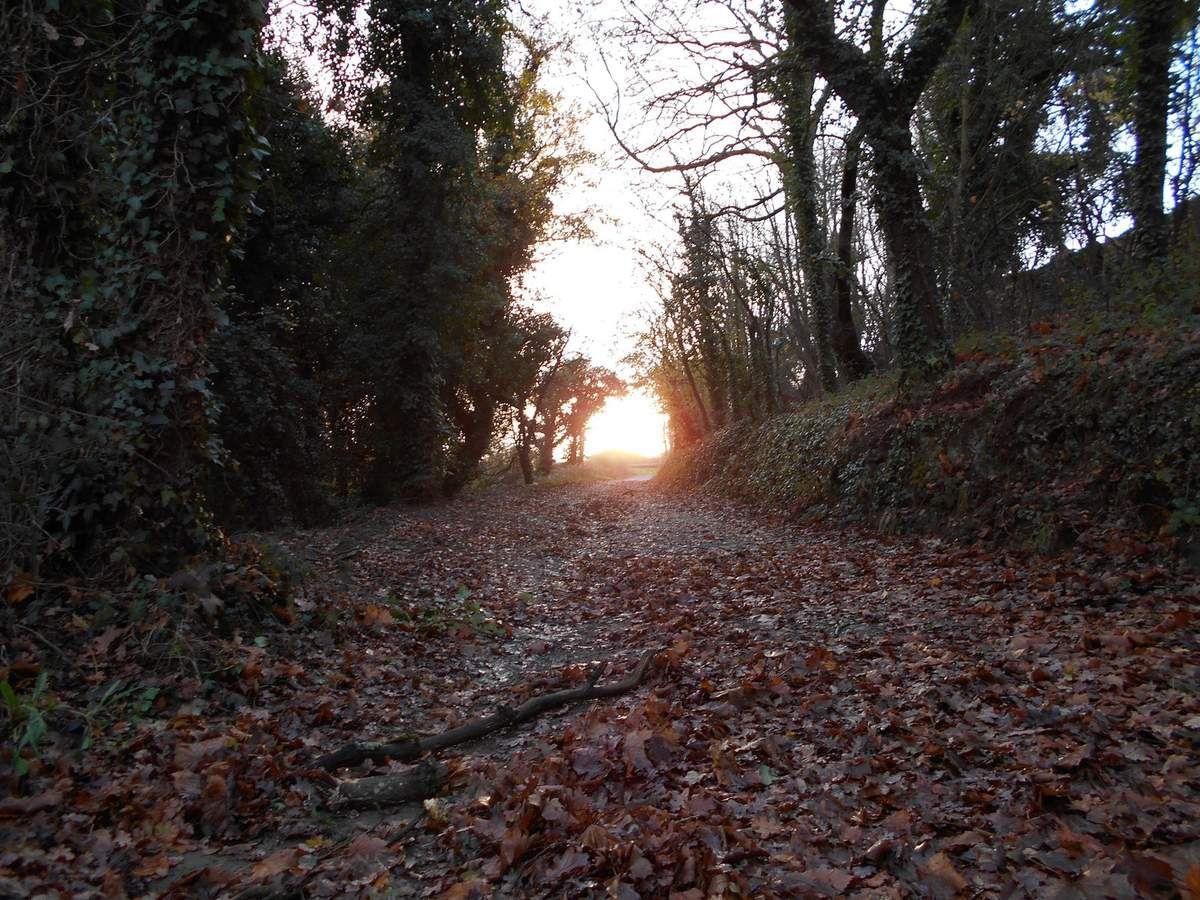 Traces d'automne, la Fin de l'automne