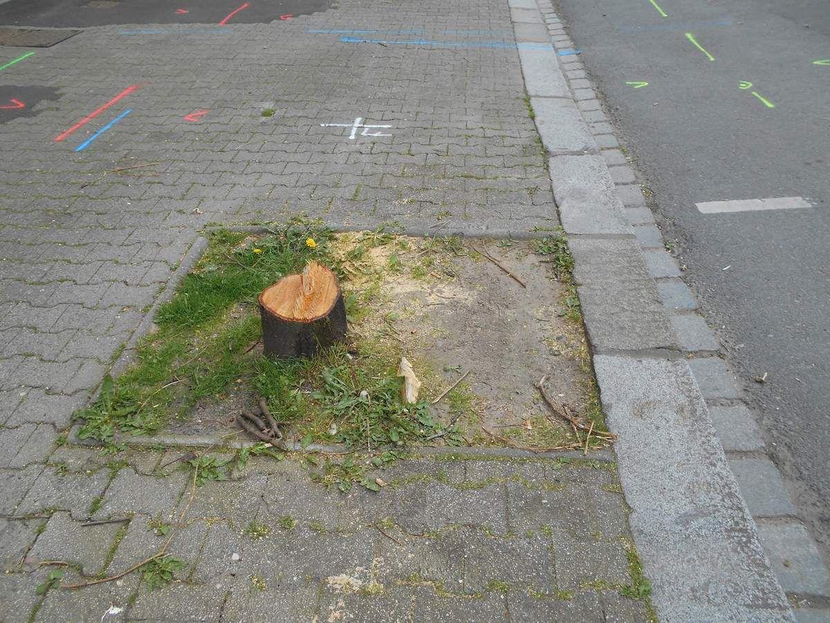 Saint-Brieuc : Abattage des arbres rue de la Gare