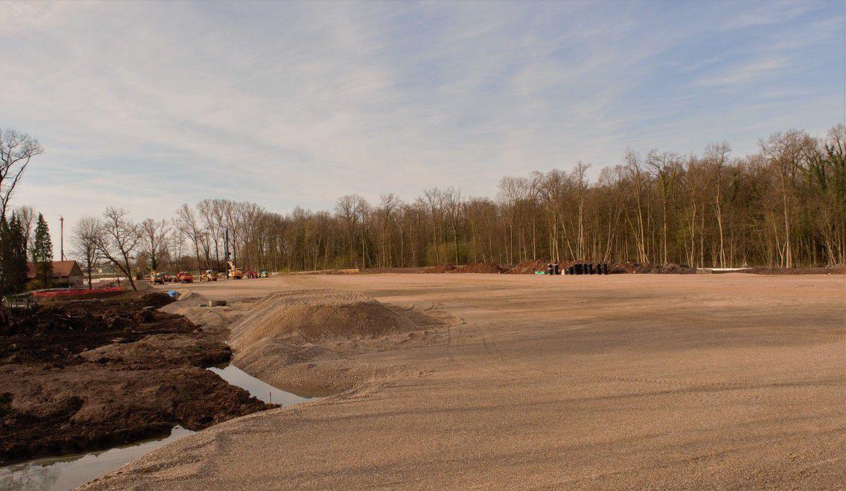"""Découverte d'une couche """"blanchâtre crayeuse"""" qui indique l'ancien fond de mer.... Source archéologie.  Un grand champ de gravier remplace malheureusement cette forêt en zone humide."""