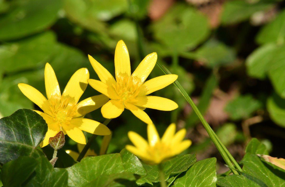 Avril et ses fleurs de saison