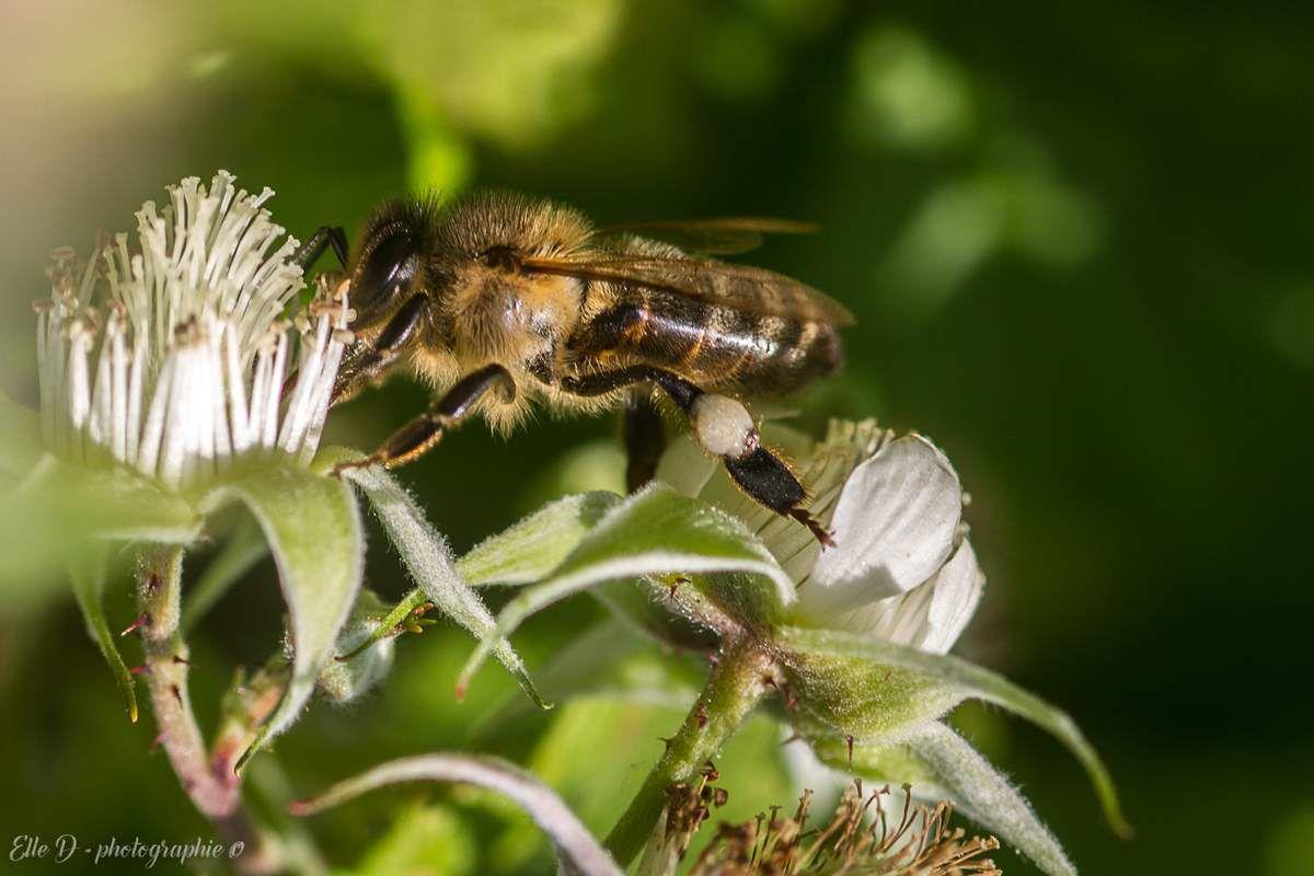 """"""" L'homme n'était pas destiné à faire partie d'un troupeau comme un animal domestique, mais d'une ruche comme les abeilles."""" Emmanuel Kant"""