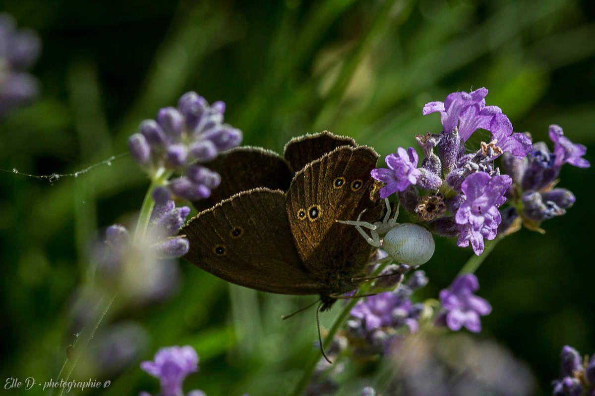 Un binôme risqué pour le papillon qui porte le joli nom de Tristan.