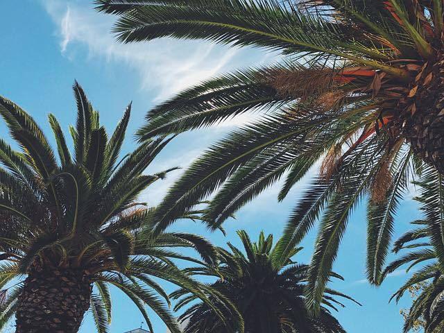 Baume Coco 100% naturel - Baumes magiques multiusages - Les Petits Prödiges