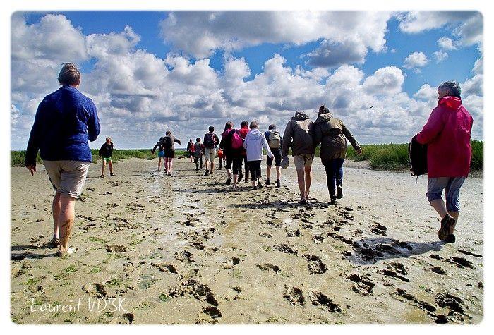 Groupe qui marche dans la baie de Somme
