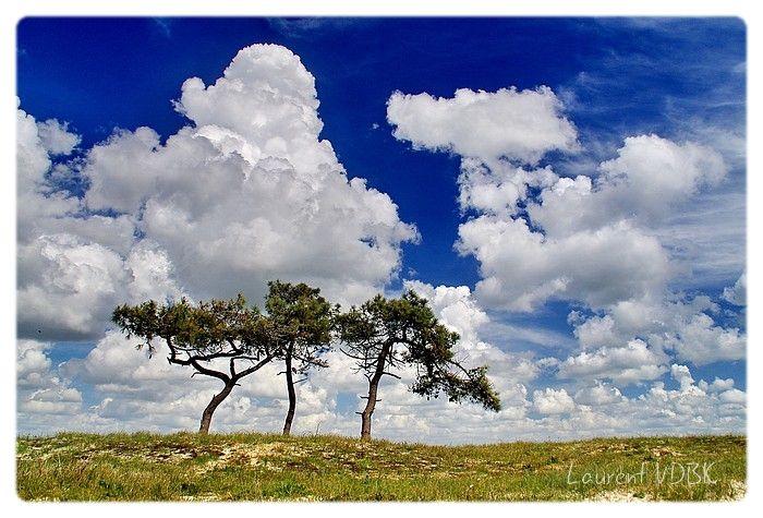 Trois arbres isolés. Ciel bleu et nuages blancs, plage de la Lyarne, les Moutiers-en-Retz