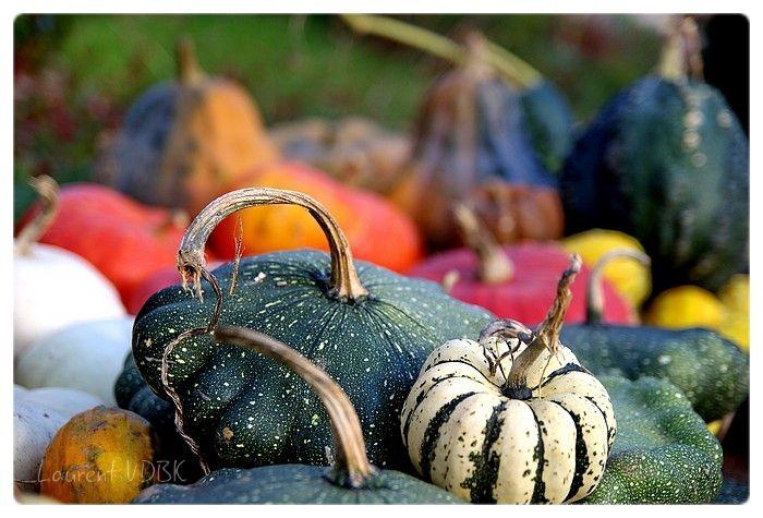 Jardin des Plantes - Rouen - Citrouilles et autre légumes d'automne