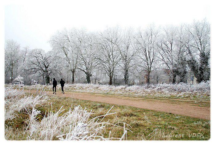 Givre à l'hippodrome des Bruyères - Le champ de course l'hiver - Sotteville-lès-Rouen - Sotteville-lès-Rouen - Grand Quevilly - St Etienne du Rouvray