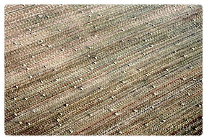 Ballots de paille dans un champ vu de haut - Lignes diagonales