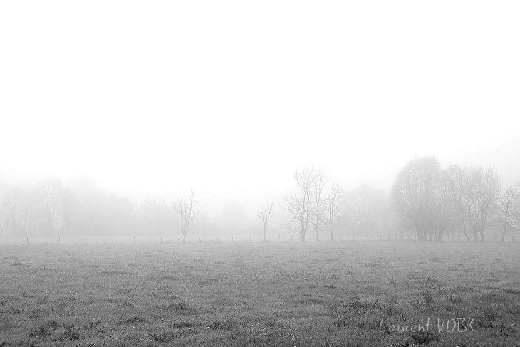bocage de normandie dans la brume