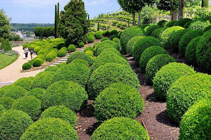 Boules de buis dans les jardins du château d'Amboise