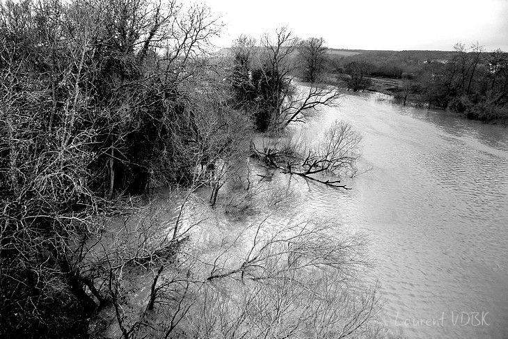Crue de la Seine en Normandie à cause des fortes pluies et des grandes marées (arbres les pieds dans l'eau) - Janvier 2018 - Noir et Blanc