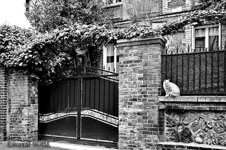 Photo de rue à Rouen - Chat