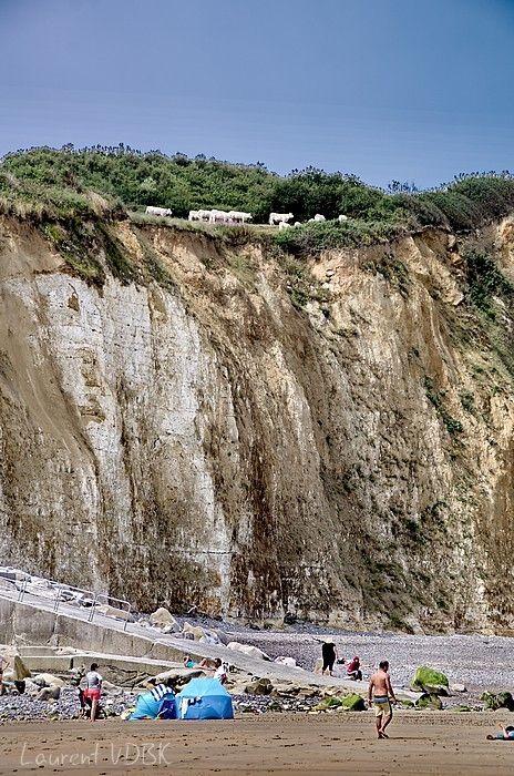 Les falaises de la Côte d'Albâtre et ses vaches à Varengeville-sur-Mer