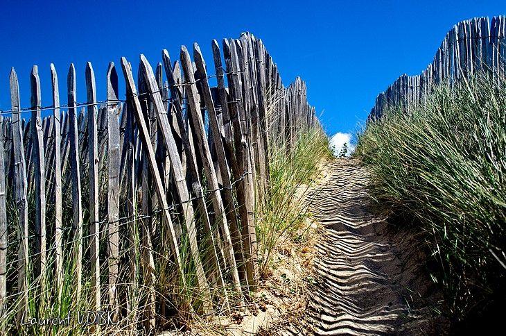 Chemin dans les dunes