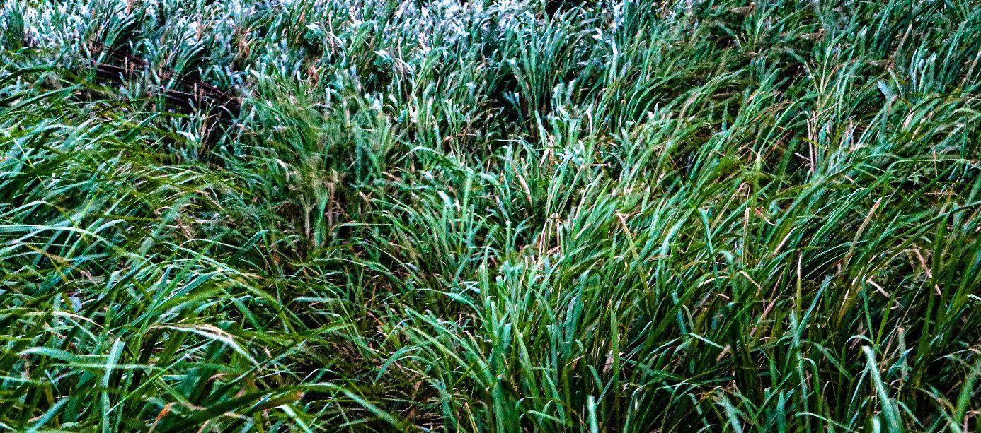 La poésie de tes herbes folles