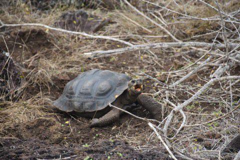 L'archipel des Galapagos, un patrimoine naturel de l'humanité