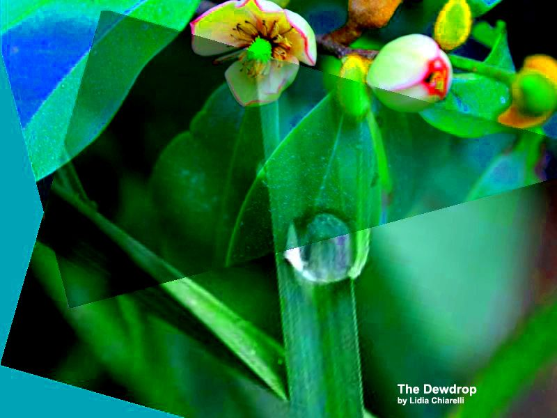 DROPS OF DEW Anthology - Tzemin Ition Tsai (Taiwan) /  Lidia Chiarelli (Italy)