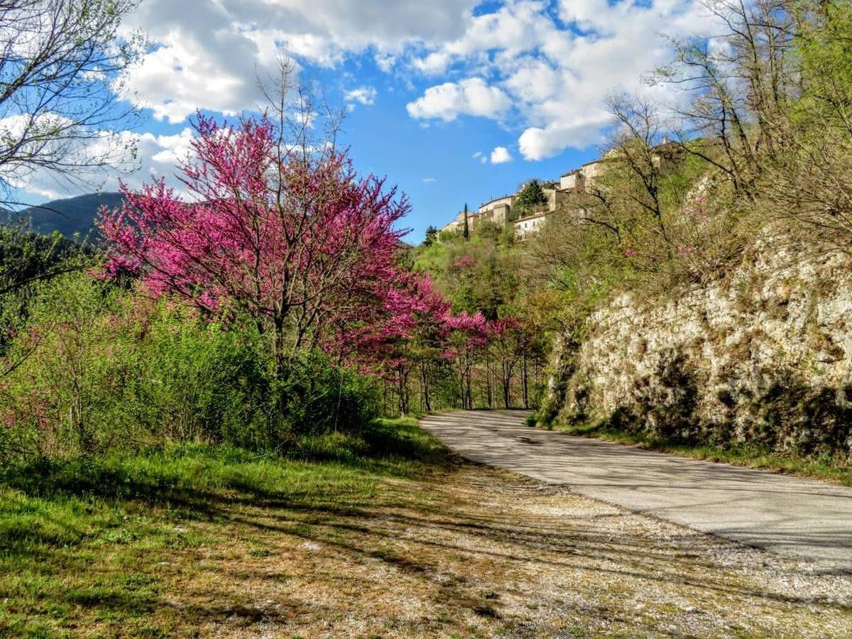La meravigliosa fioritura dell'Albero di Giuda in Valnerina