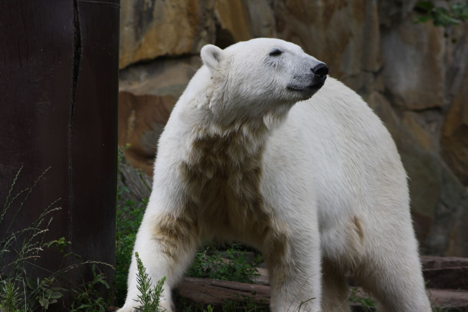 Erinnerung an Knut 09.07.2009