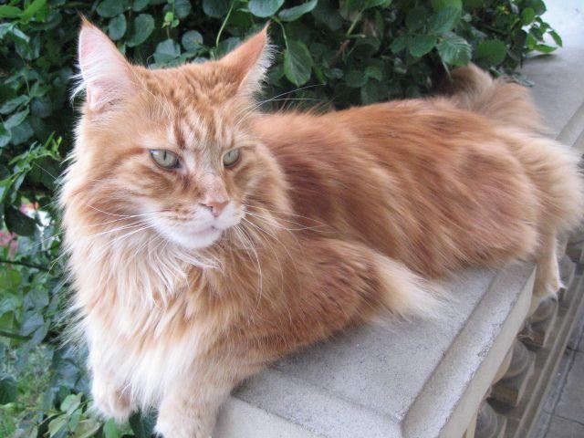 Baffy le chat