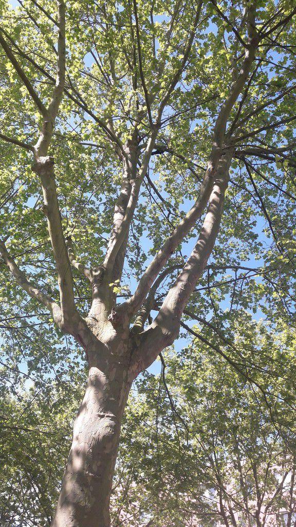 l'arbre et le vent
