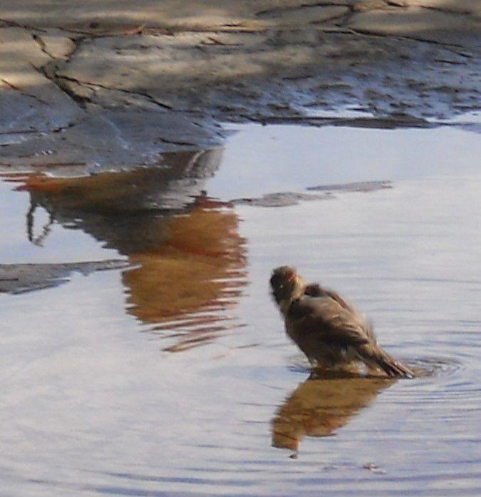 oiseau dans l'eau