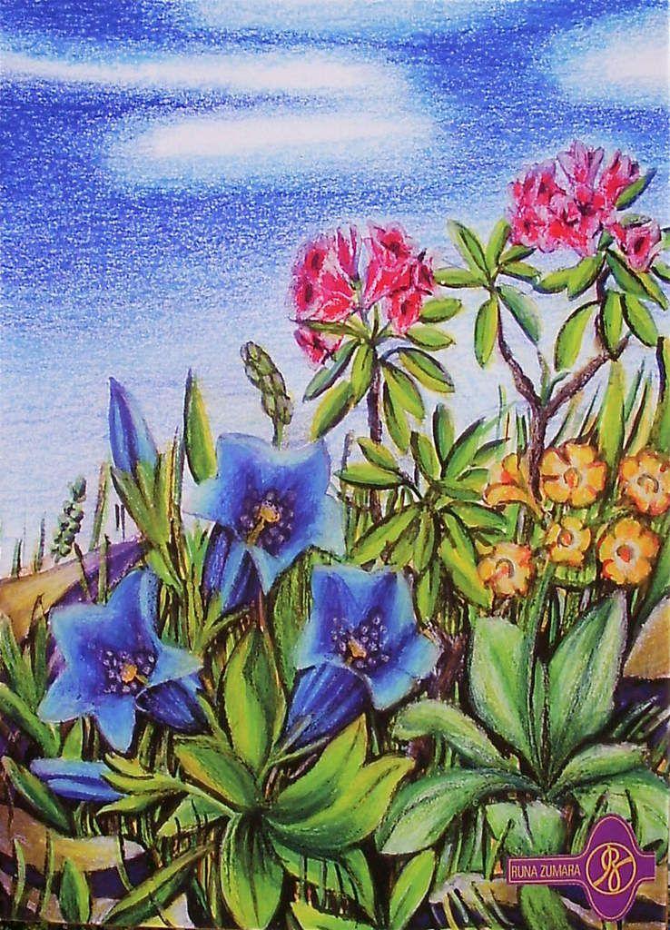 Enzian Berg Blumen / Ölkreide,Wasserfarbe RZ © 1996 / Privatbesitz