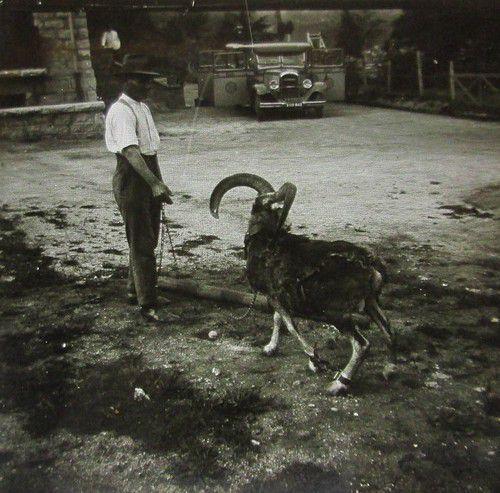 Album - VILLAGES-CORSE-DU-SUD-1900-1945 M-Z