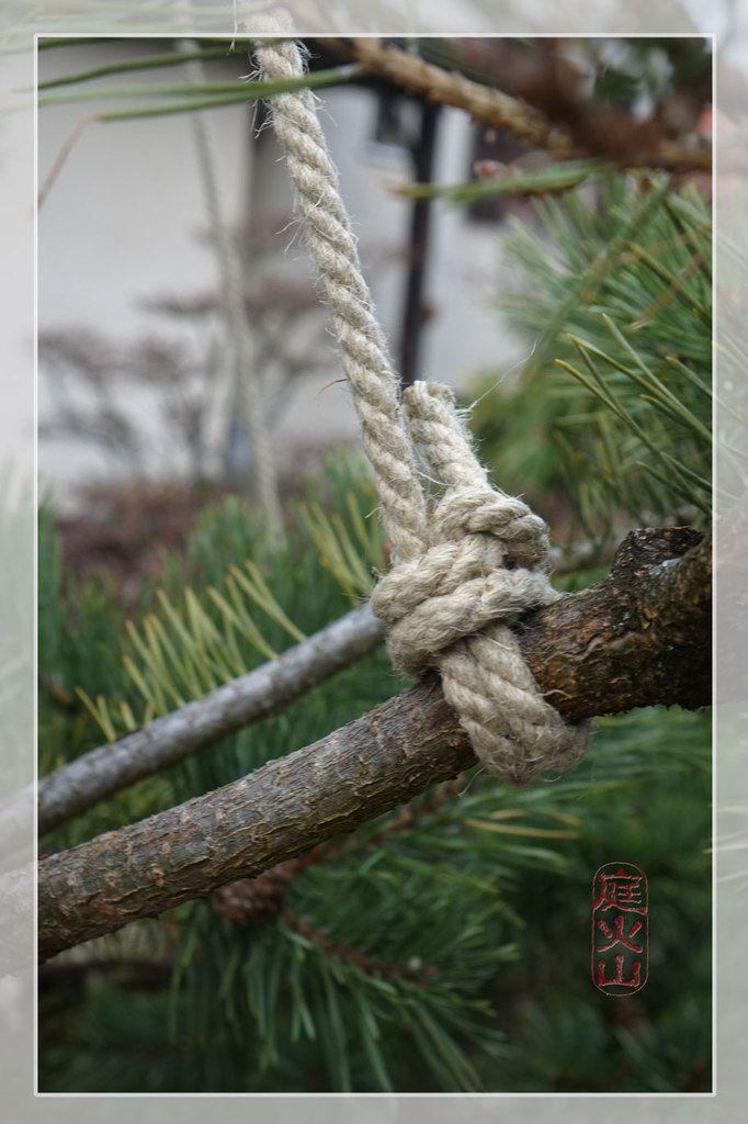 Les cordes sont légèrement tendues et accrochées en bout des branches.