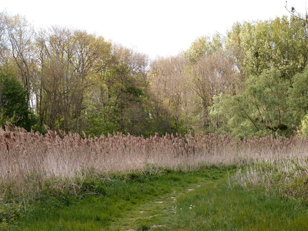 Balade naturelle à la Plaine de Sorques