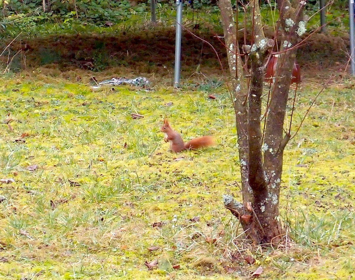 L'écureuil est de retour ! Il m'avait manqué...