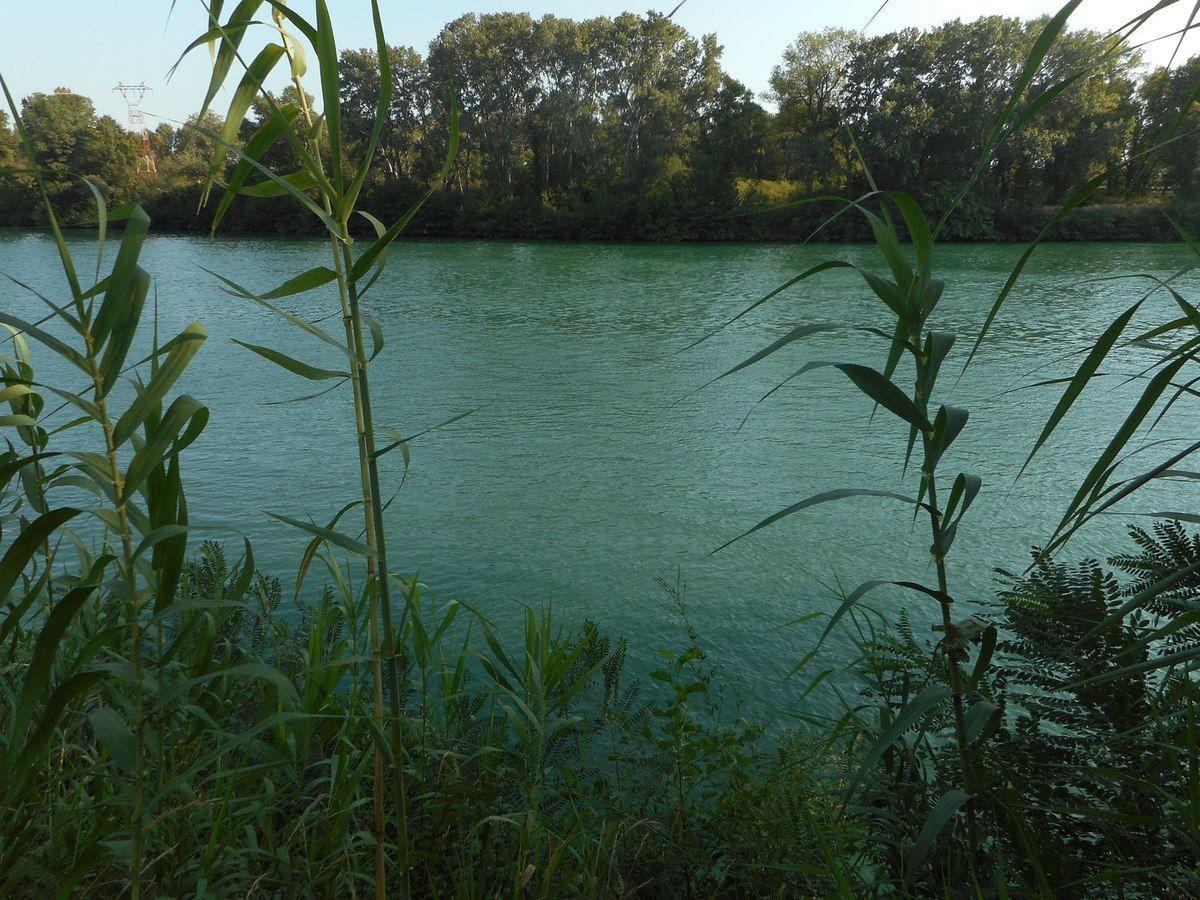 Exposition de jauge de profondeur du Rhône à l'Ile de la Barthelasse