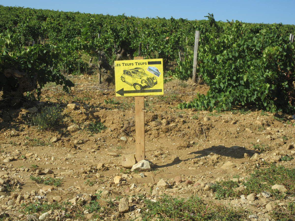 Dimanche 29 SEPTEMBRE 2019   7ème Balade dans les vignes du côté de Châteauneuf-du-Pape avec Les Belles Teufs Teufs de Caderousse