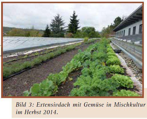 Klimaschutz Veitshöchheim: LWG stellt in Bücherei am 17. Februar Forschungsprojekt Gemüse von Dach, Terrasse und Balkon vor