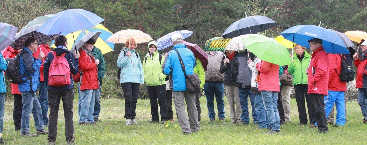 Wetterfeste NaturFreunde besuchen Adonisröschen und Kirchenburg