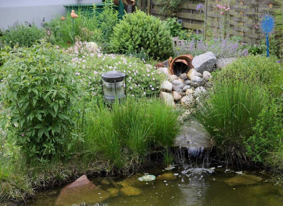 Highlight des Winkler'schen Garten ist der von den Besuchern bewunderte Teich mit Bachlauf, der neben dem Erholungseffekt vielen Lebewesen Lebensraum bietet.