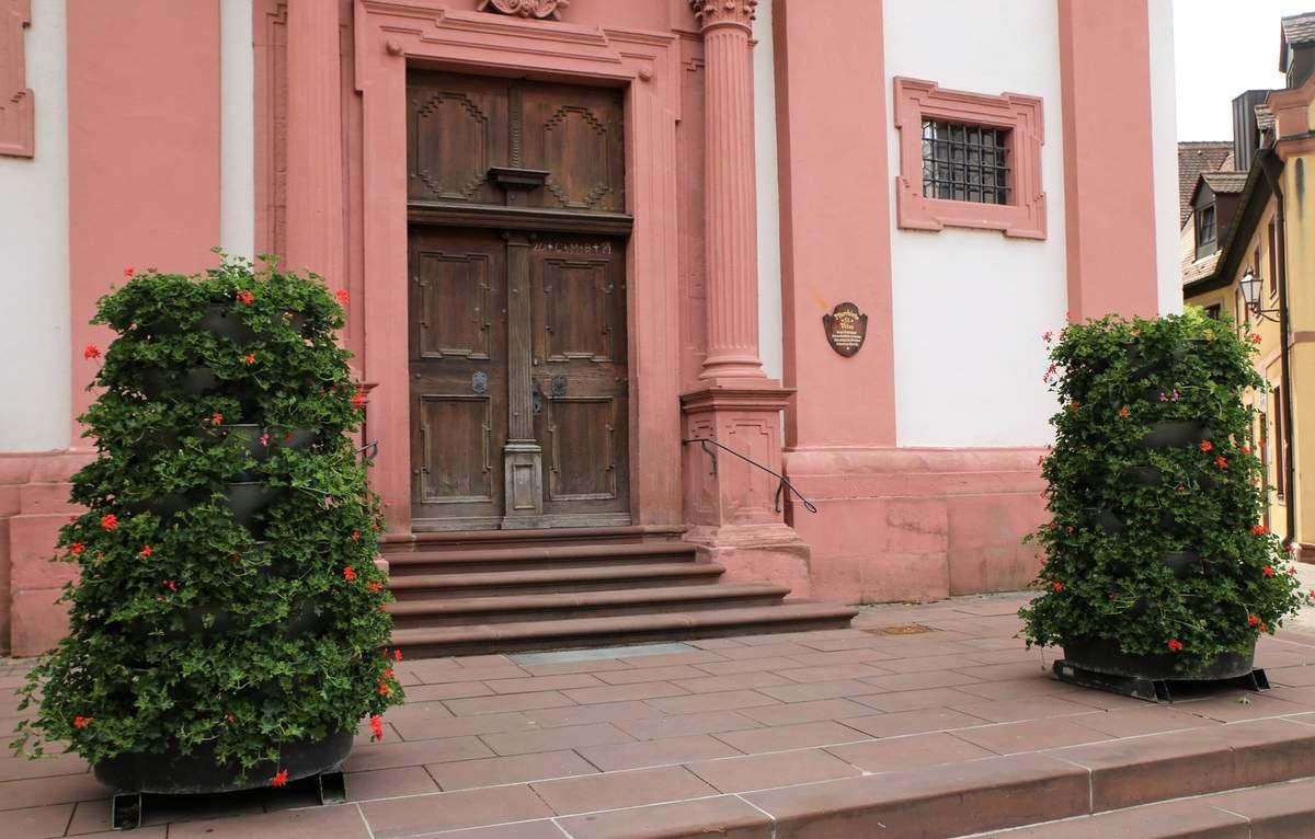 Die übrigen vier Blumensäulen, zwei vor dem Eingang zur Vituskirche und zwei in der Mainuferpromenade bepflanzte der Gärtnerexperte der Gemeinde traditionsgemäß mit roten Geranien, ebenso die 15 Ampeln an den kleineren Laternen in der Mainlände.